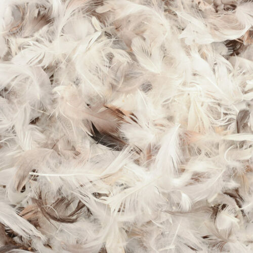 Loose Duck Feathers Stuffing Cushions Pillows Pet Beds Upholestry Crafts Filling